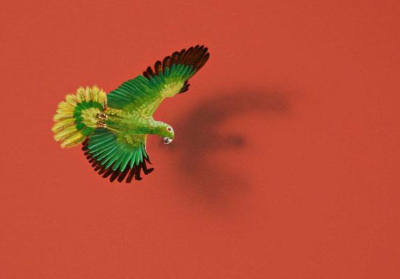 Detail Papagei
