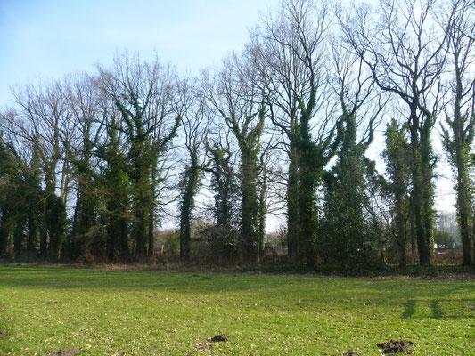 Chor der Bäume