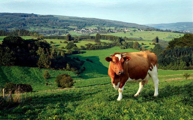 Fromagerie des Ardennes (Werbomont)