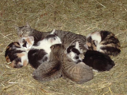 unsere verspielten Baby-Kätzchen