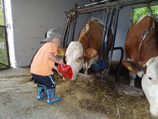 Kindern macht es riesigen Spaß bei der täglichen Stallarbeit dabei zu sein, die Tiere zu füttern ...