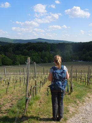 Blick auf die Starkenburg auf dem Heppenheimber Schloßberg (©odenwaldlust.de)
