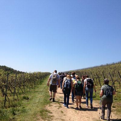 Die Hüttenwanderung führt durch die Weinlagen von Bensheim-Auerbach. (©odenwaldlust.de)