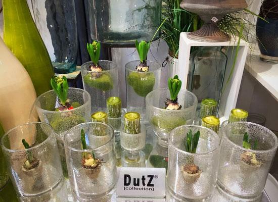 DutZ Vasen für Pflanzen_weiss