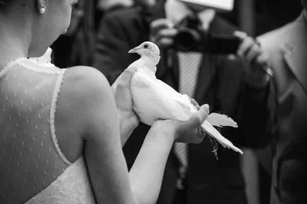 Hochzeitstaube, München