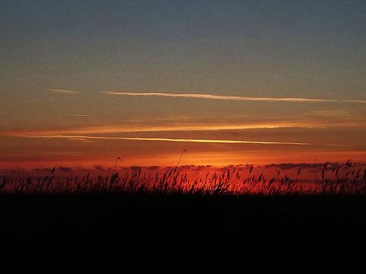 Morgendämmerung, Neusiedler See, 2019