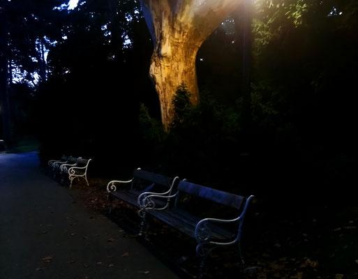 Herbststimmung, Türkenschanzpark, Wien, 2019
