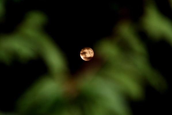 Mond, 2011