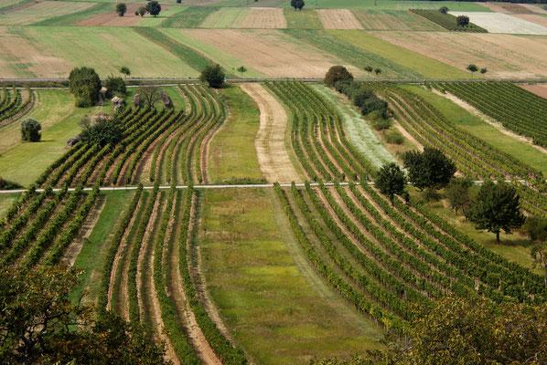 Felder im Burgenland, 2009