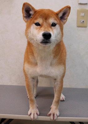 大田空ちゃん