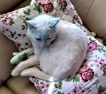 Lilly (sie liebte die grüne Farbe)
