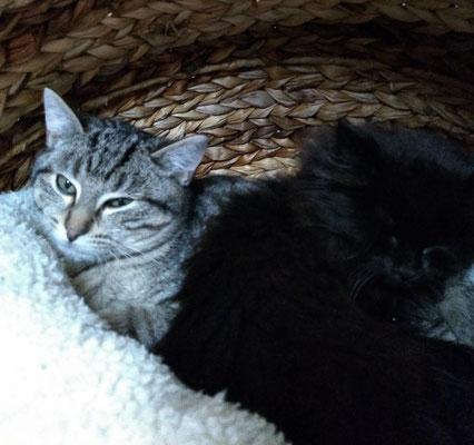 Benni und Blacky