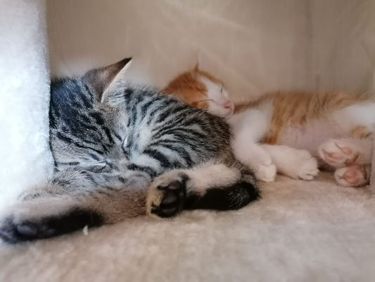 Leo und Jasper