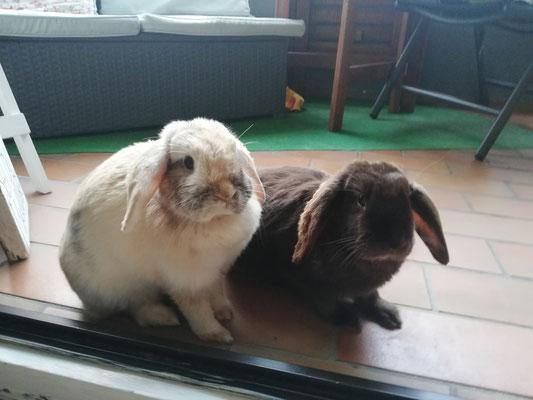 Schoko und Lola