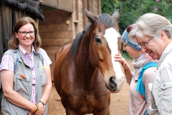 Pferde auf der Makoa Farm