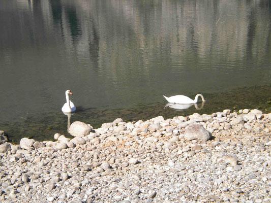 Lago d Mezzola Strand