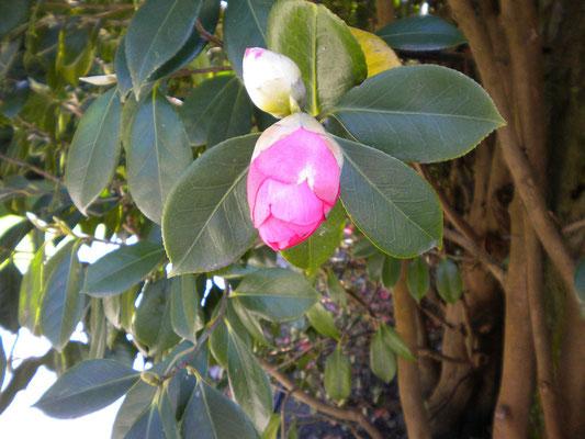 Blütenpracht Anfang April