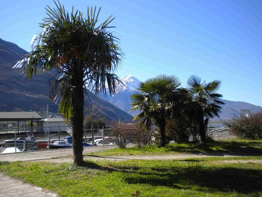 Lago d Mezzola schneebedeckte Berge und Palmen