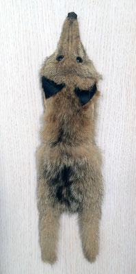 Verkürzter Fuchs