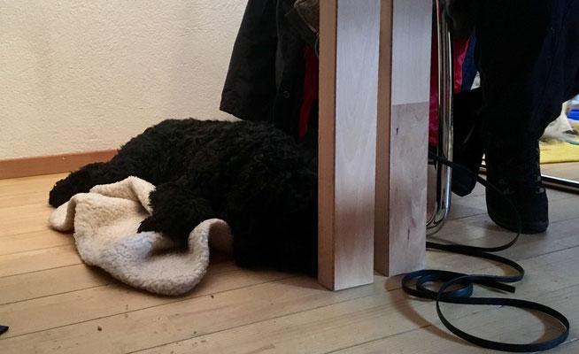 Entspannen nach anstrengender Hundewanderung