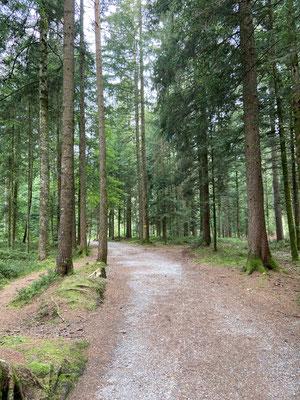 Der wunderschöne Wald auf dem Chuderhüsi