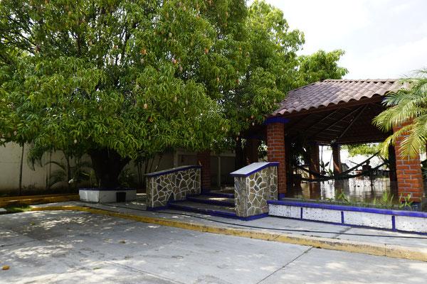 Mango tree at camping place