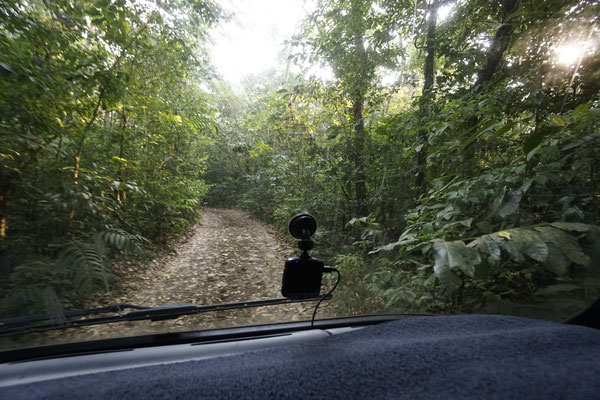 Driving thru the jungle