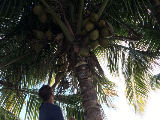 Coconut at Camping