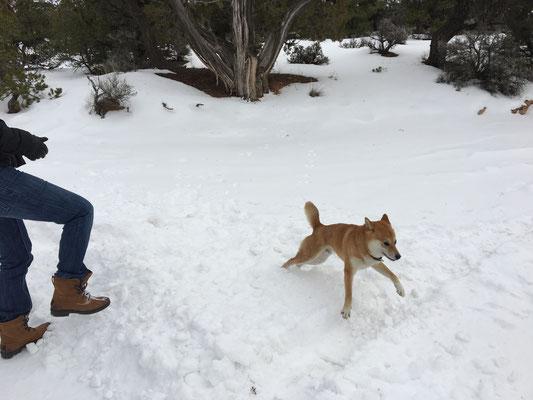 Navajo NM