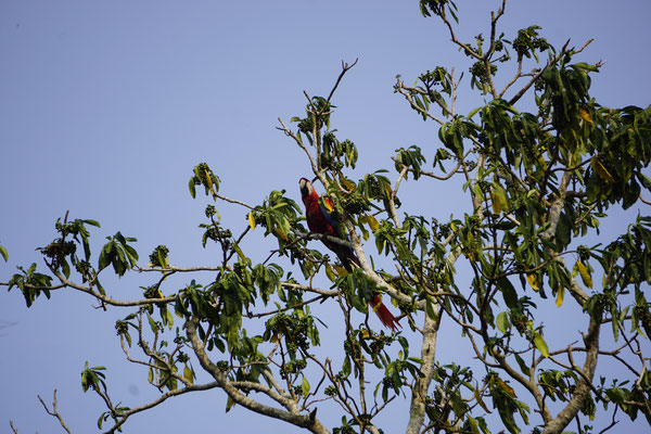 Parrot at Camping site