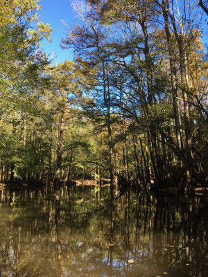 Congaree National Park SC