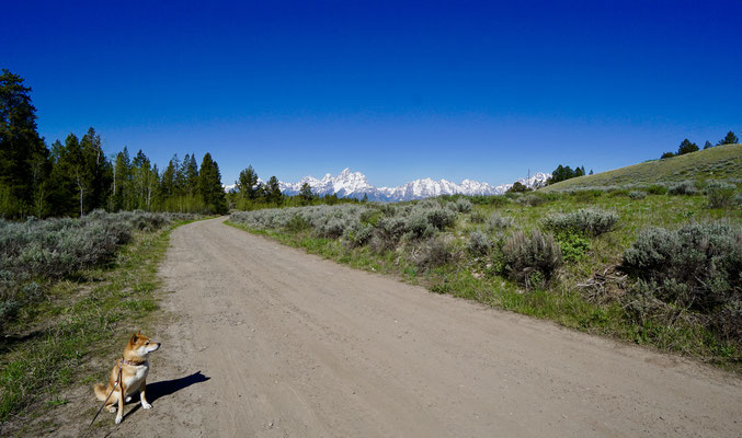 Forest BLM near Grand Teton NP