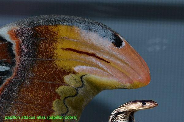 systeme de protection  l extremité de l aile ressemble a un  tête cobra