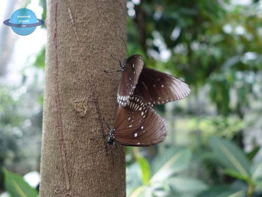 Schmetterlinge Luisenpark Mannheim