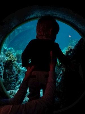 Sea Life Speyer (c) maximalplanet.com 2017