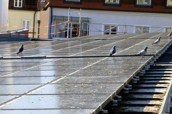 Tauben auf der Solarstromanlage