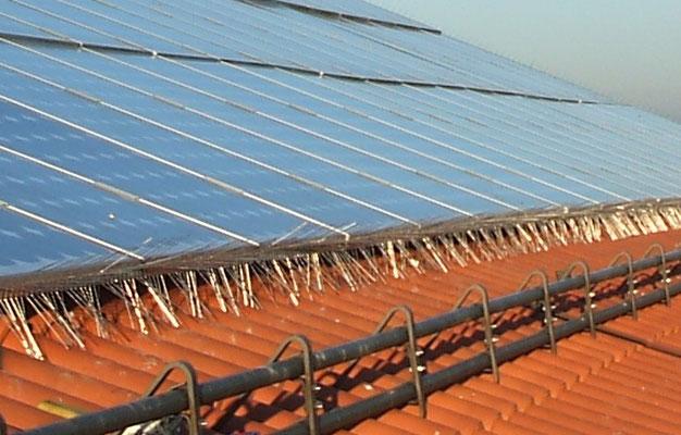 Taubenschutz Solaranlage