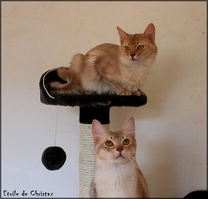 Hermione & Kazaar