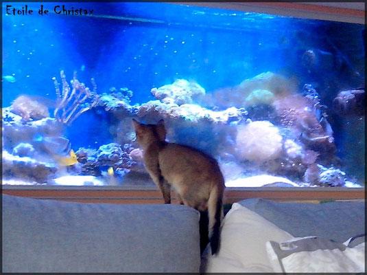 Les poissons c'est captivant !