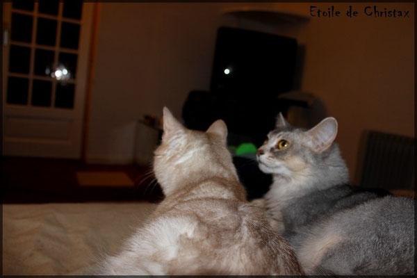 Pause télé avec Hermione & Eaïa