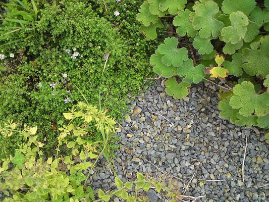 Kies und trockeng rten passend zum hei en sommer inspirierende gartenwelten - Gartenberatung berlin ...