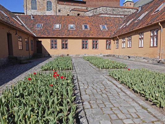 Schloss Akershus - späte Tulpenblüte