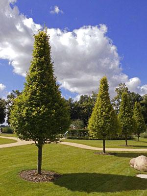 Seepark - Pyramidenbäume