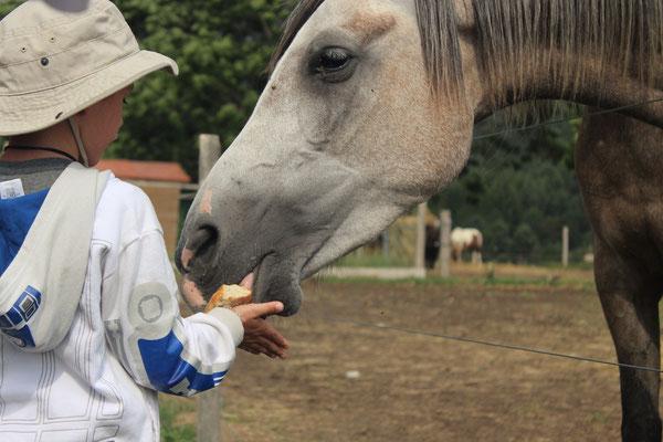 Nourrissage des animaux de la ferme