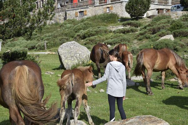 Un troupeau de chevaux est venu nous dire bonjour