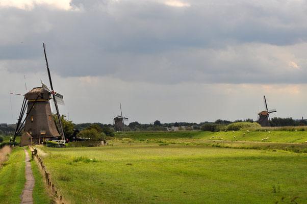 Olanda - 2014