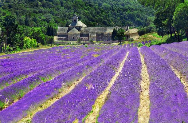Abazia di Senanque - Francia - 2010