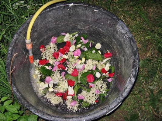 das Blumen- und Kräuter-Bad
