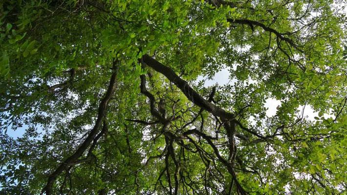 die wundervollen Bäume dieses Gartens schauen zu