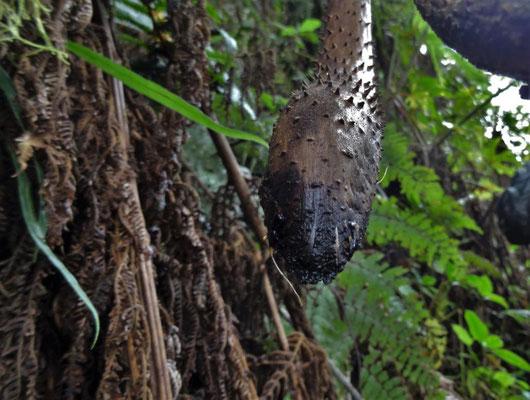 Wanderung durch den Urwald, einer herabhängenden Schlange ähnlich